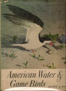 American Water and Game Birds. AUSTIN RAND